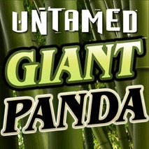 Untamed Giant Panda Slot Game